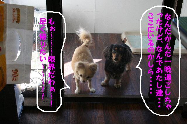 b0130018_1723473.jpg