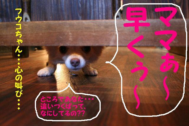 b0130018_17243167.jpg
