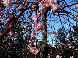 花粉到来。_f0113224_12395249.jpg