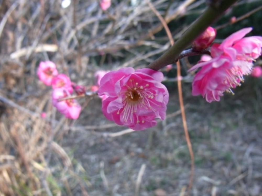 早春_f0214527_11455615.jpg