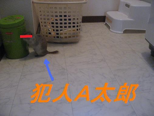 b0138734_12473145.jpg