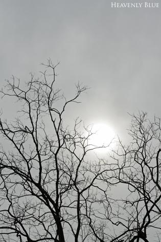 冬空と梅と・・_e0145646_20122415.jpg