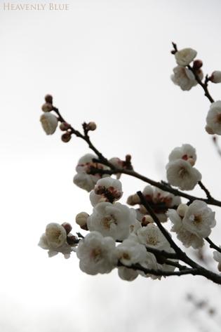 冬空と梅と・・_e0145646_2012384.jpg