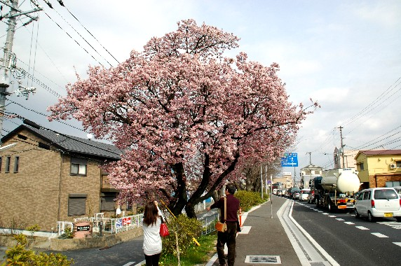 春の便り_b0093754_23475537.jpg