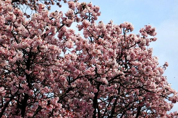 春の便り_b0093754_23482070.jpg