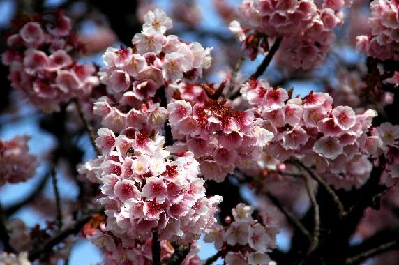 春の便り_b0093754_23483743.jpg