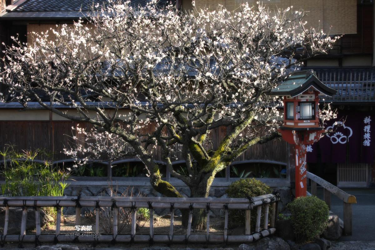 京都 DE スナップ 5_f0021869_22295956.jpg