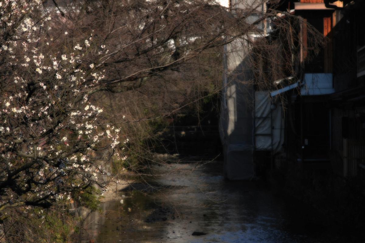 京都 DE スナップ 5_f0021869_22321665.jpg