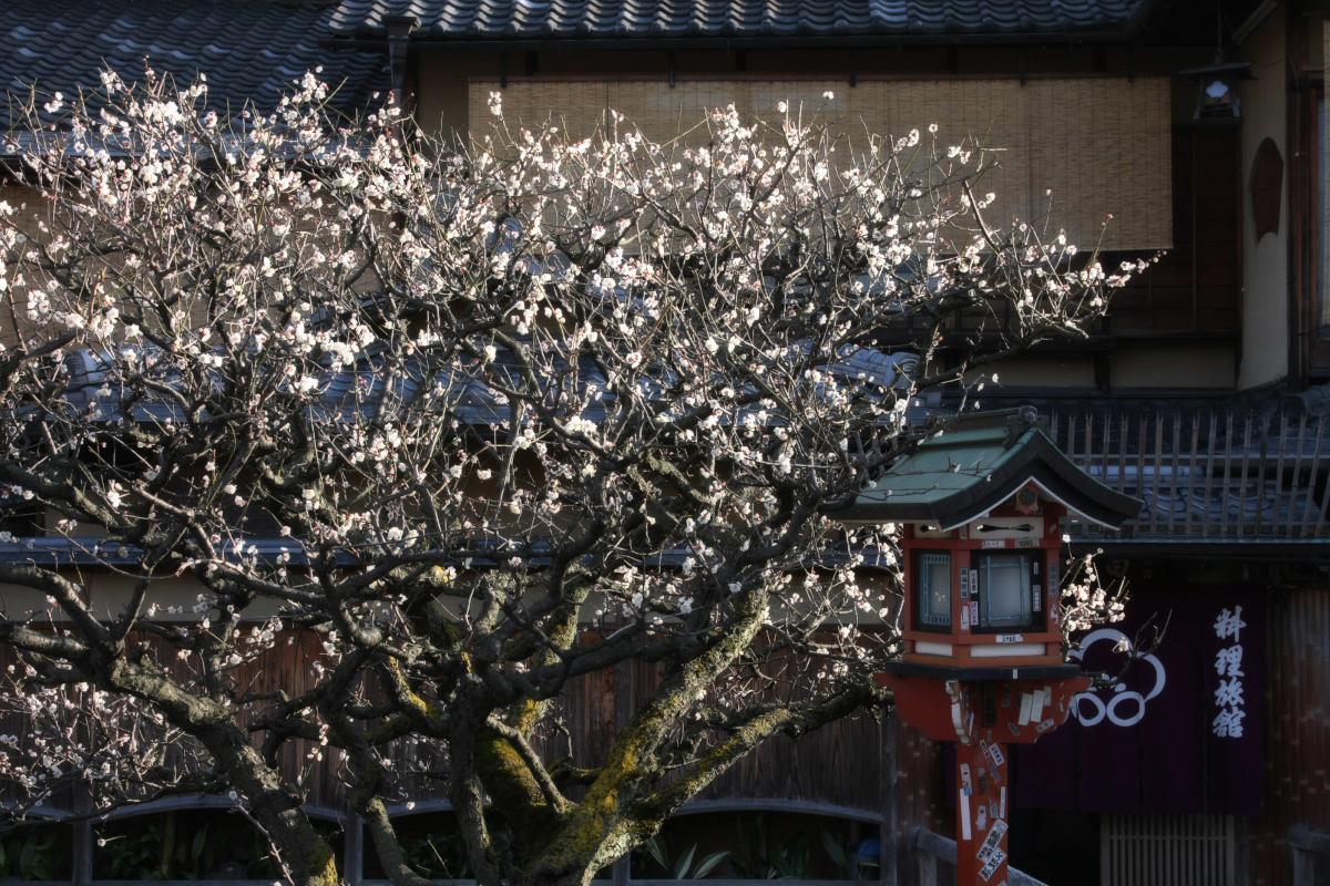 京都 DE スナップ 5_f0021869_23155714.jpg