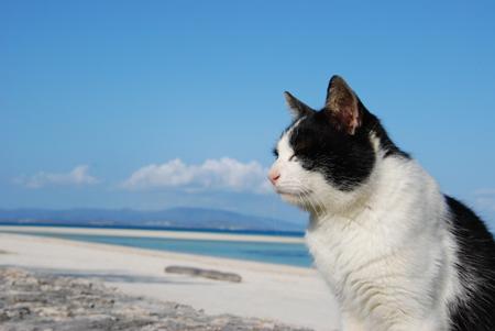 今日は猫の日、猫写真アップ!_e0171573_18375861.jpg