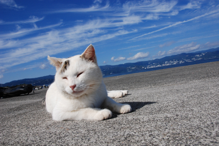 今日は猫の日、猫写真アップ!_e0171573_1838102.jpg