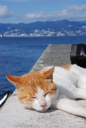 今日は猫の日、猫写真アップ!_e0171573_18381747.jpg