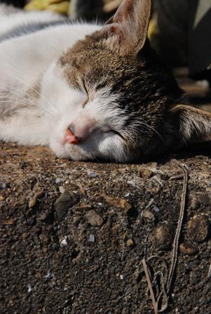 今日は猫の日、猫写真アップ!_e0171573_18382331.jpg