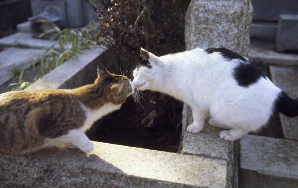 今日は猫の日、猫写真アップ!_e0171573_18383548.jpg