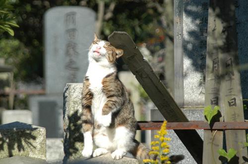 今日は猫の日、猫写真アップ!_e0171573_18384189.jpg