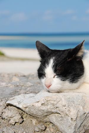 今日は猫の日、猫写真アップ!_e0171573_183844.jpg