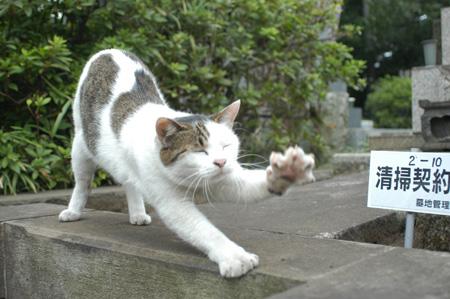 今日は猫の日、猫写真アップ!_e0171573_18384795.jpg
