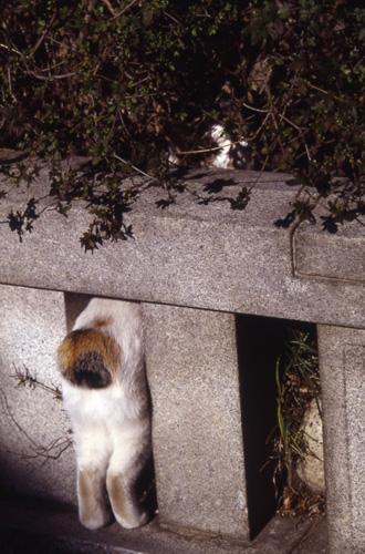 今日は猫の日、猫写真アップ!_e0171573_18385959.jpg