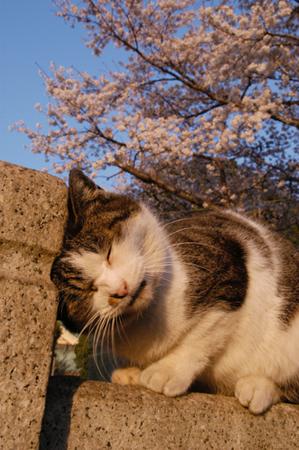 今日は猫の日、猫写真アップ!_e0171573_18391697.jpg