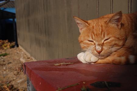 今日は猫の日、猫写真アップ!_e0171573_18393266.jpg