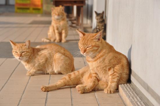 今日は猫の日、猫写真アップ!_e0171573_18394642.jpg