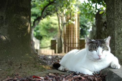 今日は猫の日、猫写真アップ!_e0171573_1839512.jpg