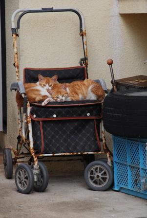 今日は猫の日、猫写真アップ!_e0171573_1840126.jpg