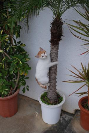 今日は猫の日、猫写真アップ!_e0171573_18402713.jpg
