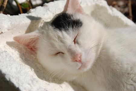 今日は猫の日、猫写真アップ!_e0171573_18403920.jpg