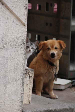 今日は猫の日、猫写真アップ!_e0171573_1840742.jpg