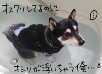 Bちゃん_b0057675_21273110.jpg