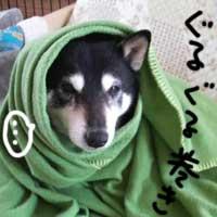 Bちゃん_b0057675_2130111.jpg