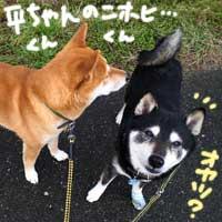 Bちゃん_b0057675_21333445.jpg