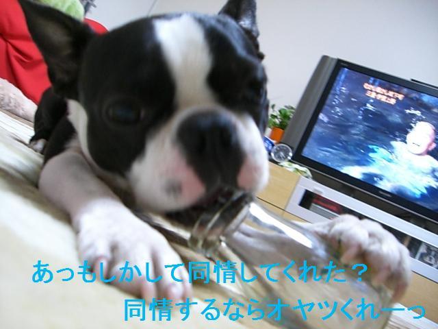 c0179376_21155070.jpg