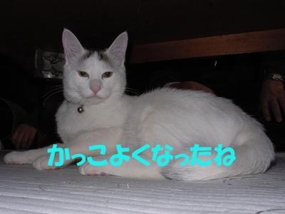 a0131387_19361581.jpg