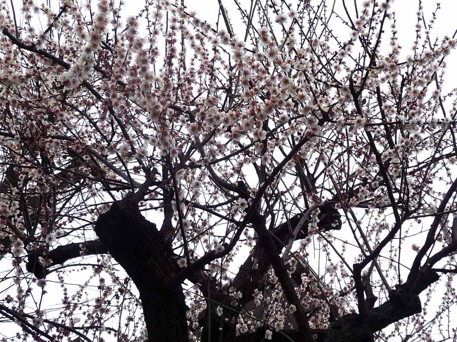 寒いよ〜_c0223095_12205029.jpg