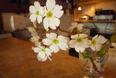 春モード_d0087595_1213581.jpg