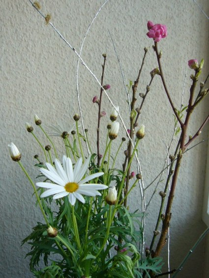 春が届いた…ちょっとてんこ盛り_a0116902_1682123.jpg