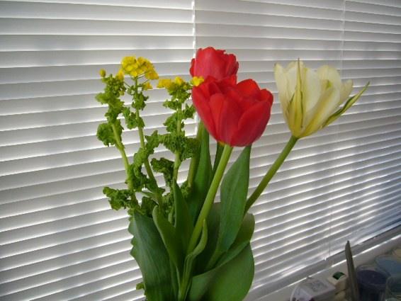 春が届いた…ちょっとてんこ盛り_a0116902_168921.jpg