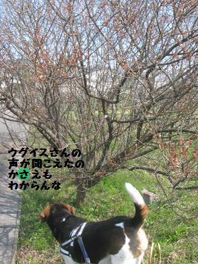 d0104209_22432492.jpg