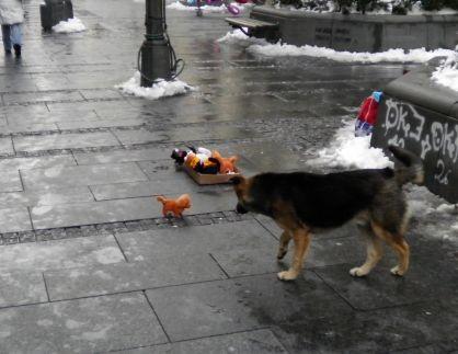 おもちゃの子犬_b0017215_4202250.jpg