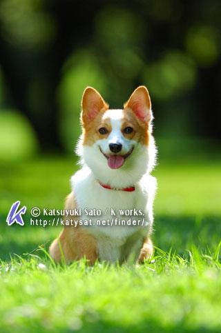 ウニちゃんが虹の橋へ_d0102523_19481476.jpg