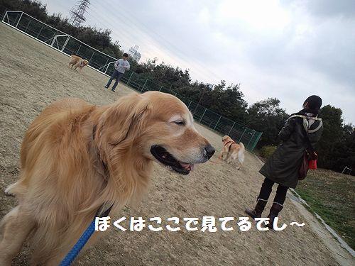 b0127531_13353827.jpg
