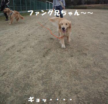 b0127531_134684.jpg