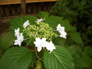 季節の花_f0218831_15374924.jpg