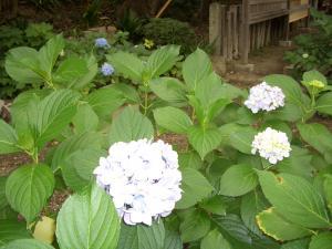 続・季節の花_f0218831_15464454.jpg