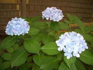 続・季節の花_f0218831_15465162.jpg