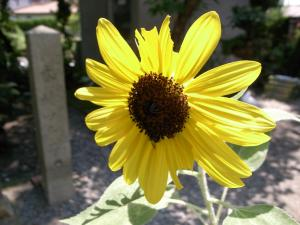 夏の植物_f0218831_1549502.jpg