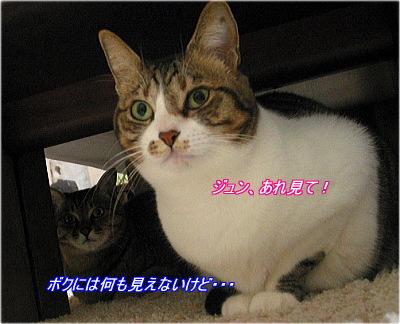 b0097848_72579.jpg