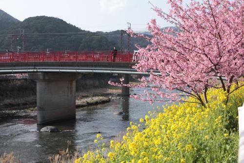 庭の「河津桜」が咲きだしました♪_c0118352_22563057.jpg